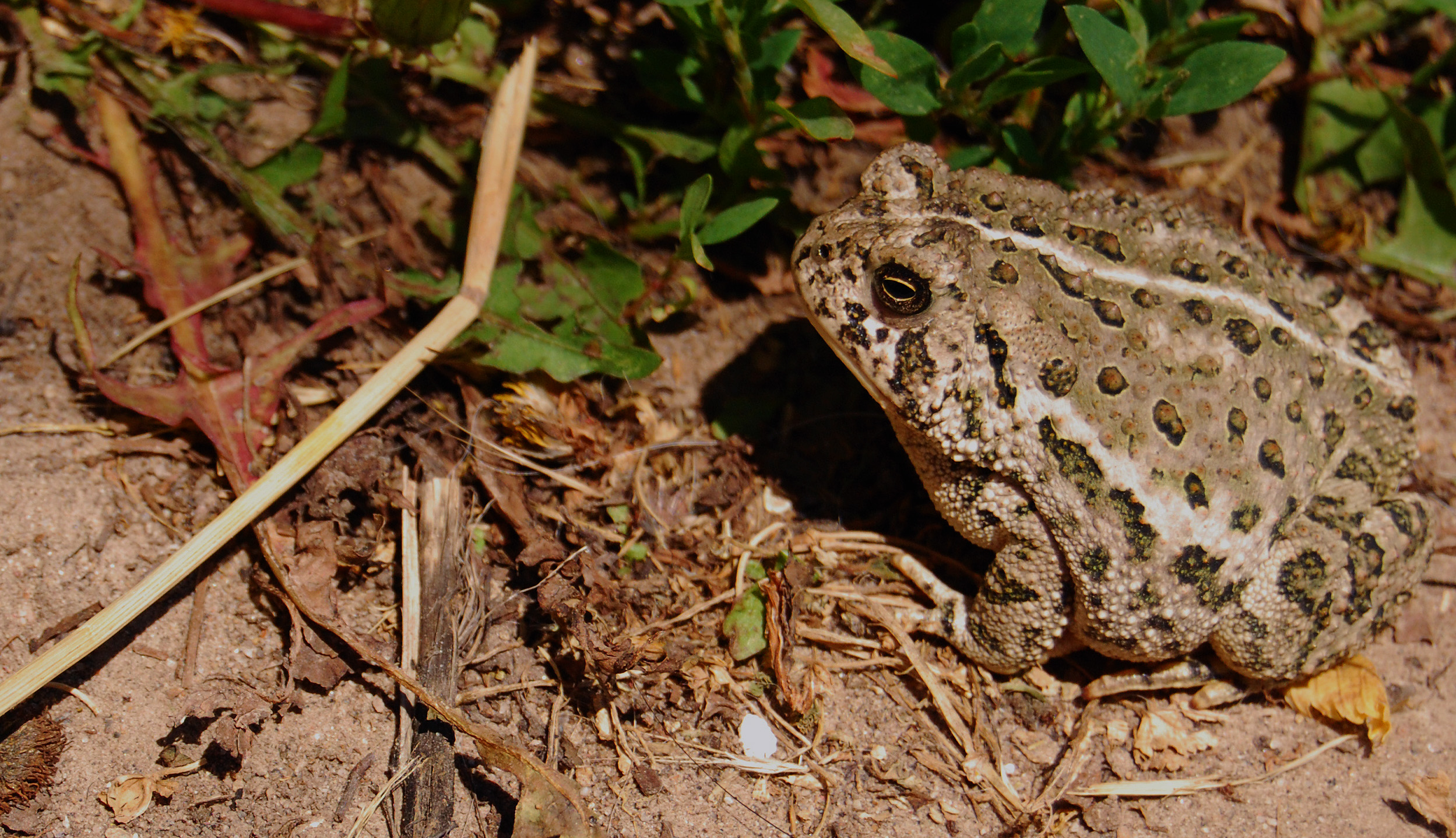 A toad catching kind of life – Dirt Road Wife Photography ...