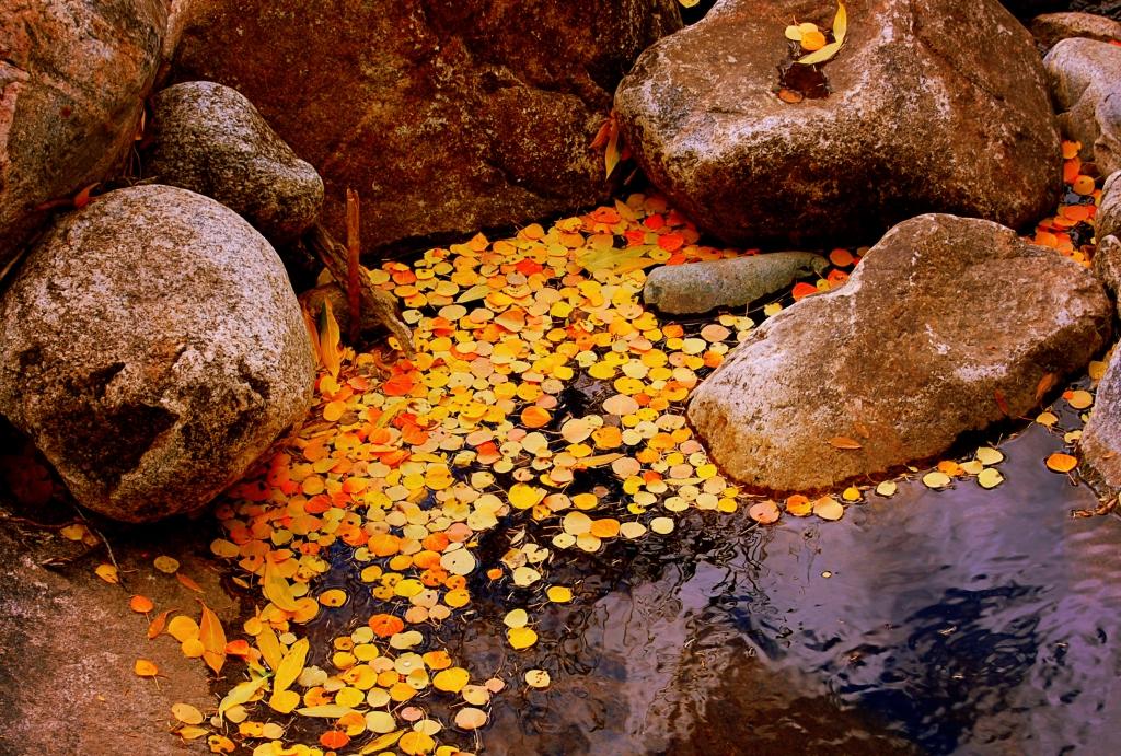Leaves in Rock pool