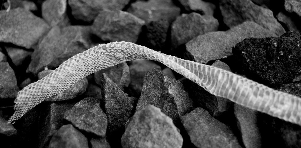 Snake Skin BW