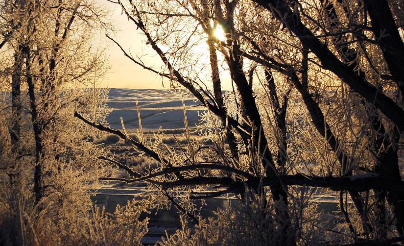 Frosty morninge