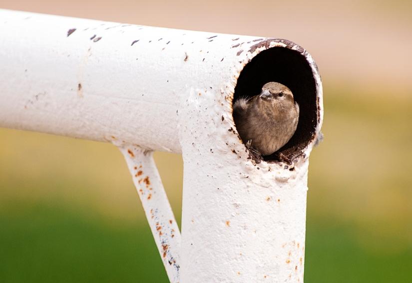 Peek A Boo Bird 2