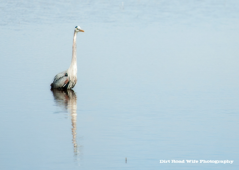 Heron3 CR