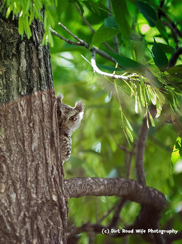 Debs Owls 2