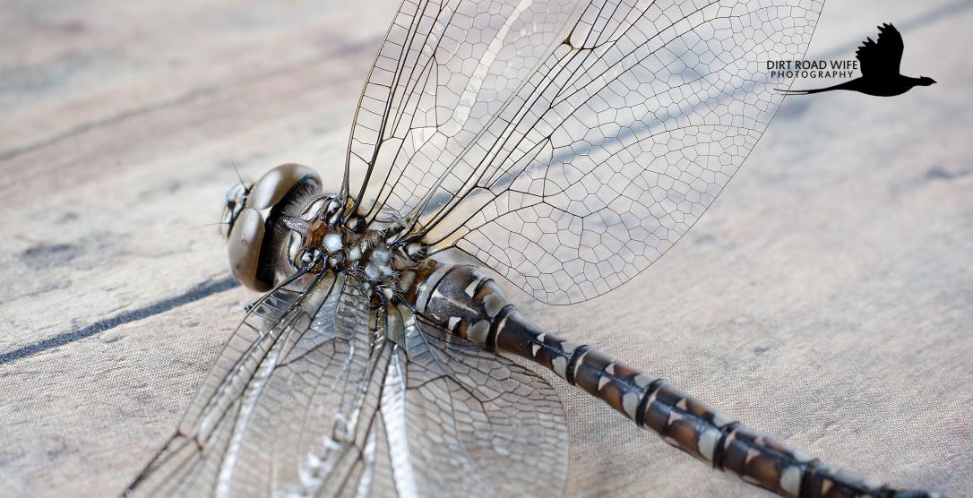 Dragon Fly 2 CR