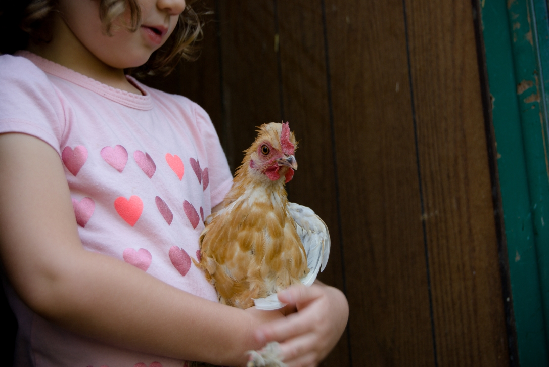 Emily and Chicken-5