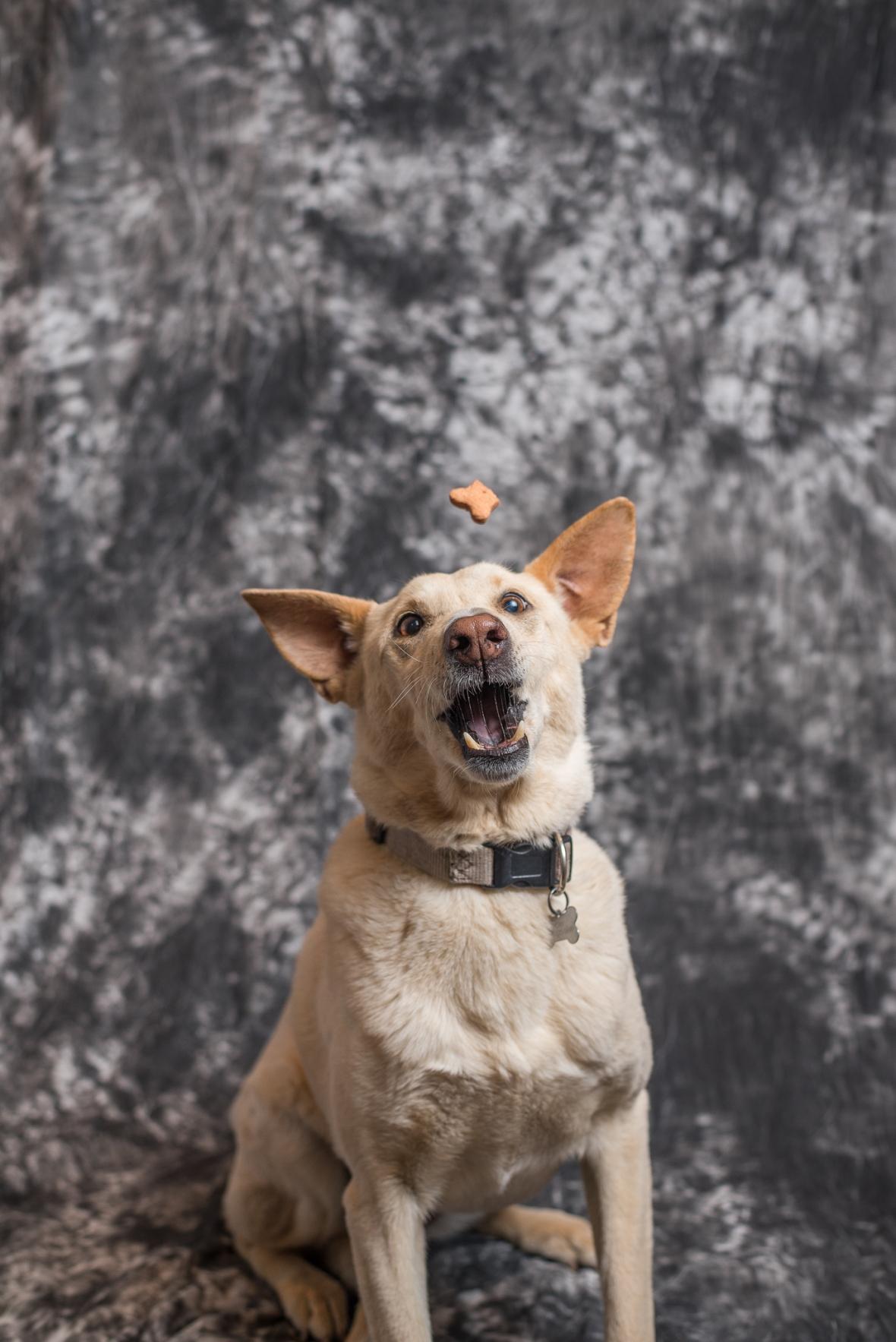 Dogs Catching Treats Web-2