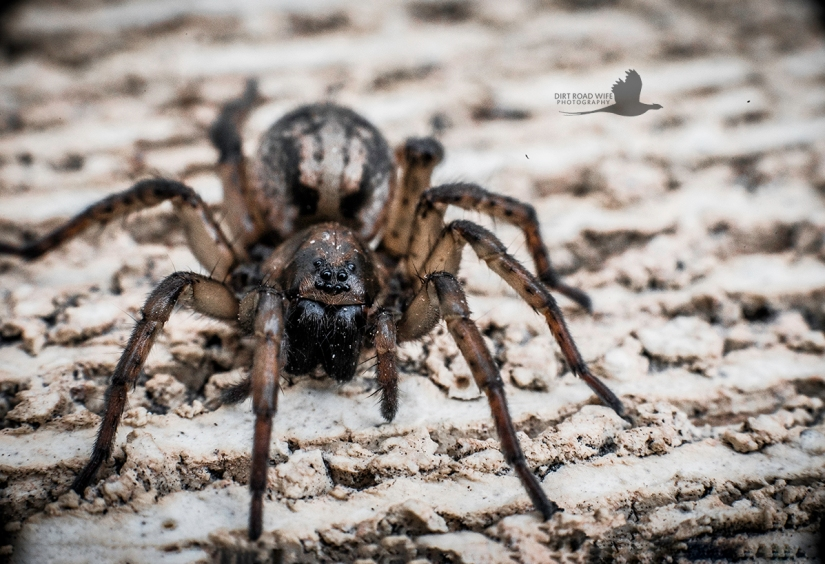 Spider Grunge Final Web